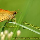 Nature Photography Challenge by César Torres