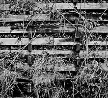 Bulging Wooden Slats by AndrewBerry