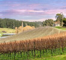 Vineyard - Uraidla, The Adelaide Hills, South Australia by Mark Richards
