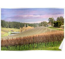 Vineyard - Uraidla, The Adelaide Hills, South Australia Poster