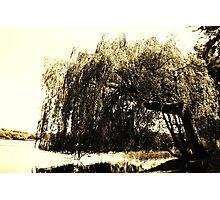 Waving Willow  Photographic Print