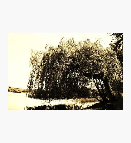 Waving Willow  Photographic Print