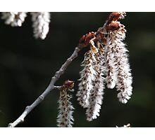Springtime. Photographic Print