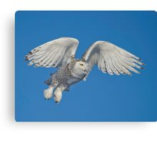 Leaping Snowy  Canvas Print