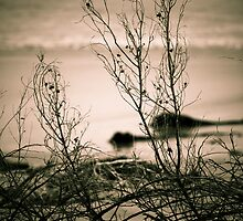 Beachfront Bushes by riaanswanepoel