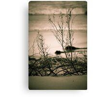 Beachfront Bushes Canvas Print