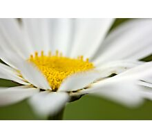 Would you be a Daisy? Photographic Print