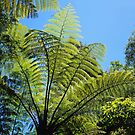 New Zealand Ferns by Alex Cassels
