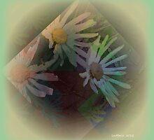 Daisy.. Daisy.. Daisy.. by linmarie