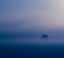 Lone tree by Karen Havenaar