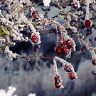 Frosted Berries by Vicki Field