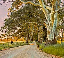 Country Road II - Monkhouse Rd, Woodside, The Adelaide Hills by Mark Richards