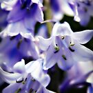 Bluebell Flowers by Vicki Field