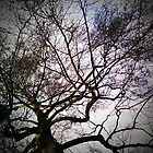 Branches. by AmyAmata