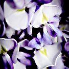 Purple wisteria flowers by Vicki Field
