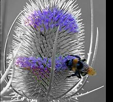 Bee And Teasle by bpzzr