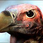 Don't eyeball me! by Greg Parfitt