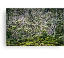 Gums @ Dove Lake Tas Canvas Print