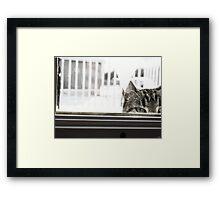 Peek-a-boo kitty Framed Print