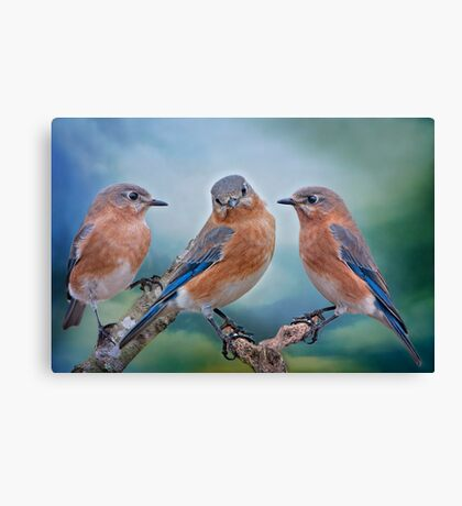 Bluebird Trio Canvas Print