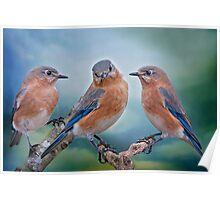 Bluebird Trio Poster