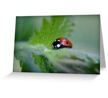 Ladybug on a leaf Greeting Card