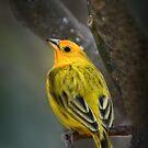Mr Finch by Ticker
