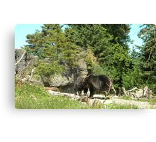 Playful Bears Canvas Print