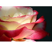 Double delight bathed in sunlight Photographic Print