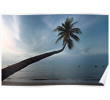 Coconut tree Poster
