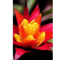 Red Orange Flower 1 Photographic Print