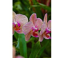 Pretty Pink Orchids Photographic Print