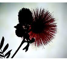 Subtle Red Photographic Print