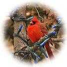 Winter Cardinal by Robin Lee