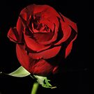 Red Rose by Robin Lee