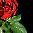 Love Is by Robin Black