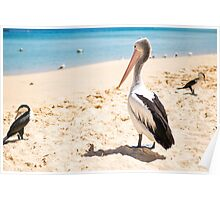 Birds resting on the beach Poster