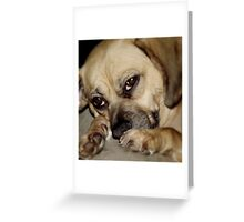 Unconditional  Love! Greeting Card