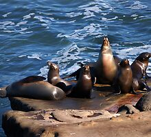 Seals, but not the Navy kind by Daniel Silva