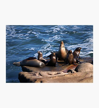 Seals, but not the Navy kind Photographic Print
