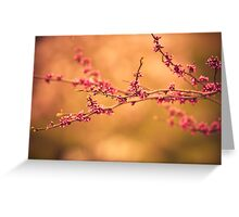 Redbuds, and magnolias... Greeting Card