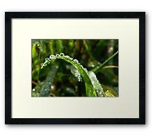 Dragon Dew Framed Print