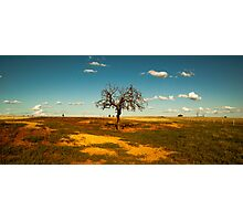 Sparse Tree - Parkes, NSW Photographic Print