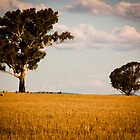 Parkes Countryside by Phoebe Kerin