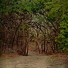 The Path by Lisa Holmgreen