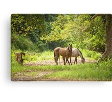 Ross and Locke Horses 3 Canvas Print