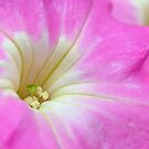 Pretty Pink Petunia by Glenda Williams
