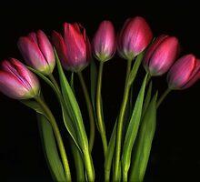 Seven Tulips by Barbara Wyeth