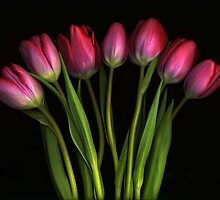 Seven Tulips by Barbara Wyeth