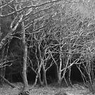 Beautiful Trees by dopeydi